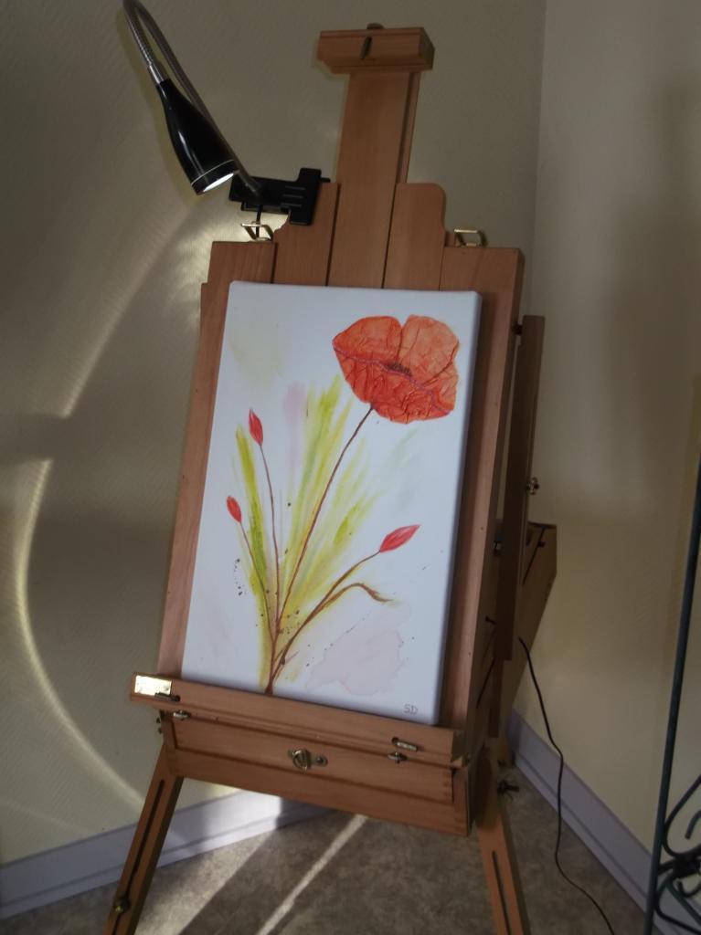 Coquelicot en fleur