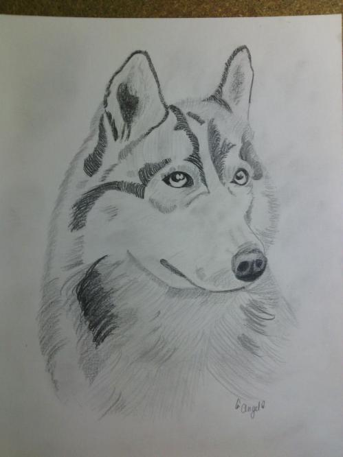 Samie le husky